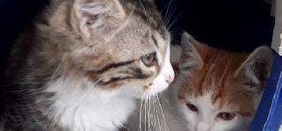Leo y Felipe