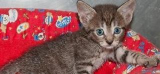 5 gatitos