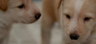 Cachorritos 1 mes