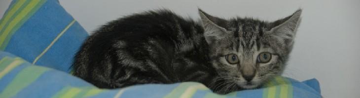 Gato sobre cama