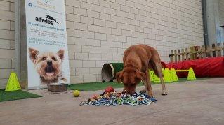 Fundación Protectora de Animales de Navarra