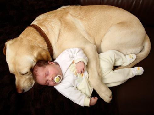 Adoptar un peludito adulto. Sus ventajas