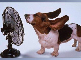 """Queremos prevenir un """"golpe de calor"""" a nuestro peludito"""